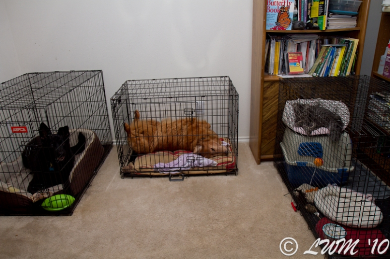 Sascha, Maggie, and Delilah In Crates