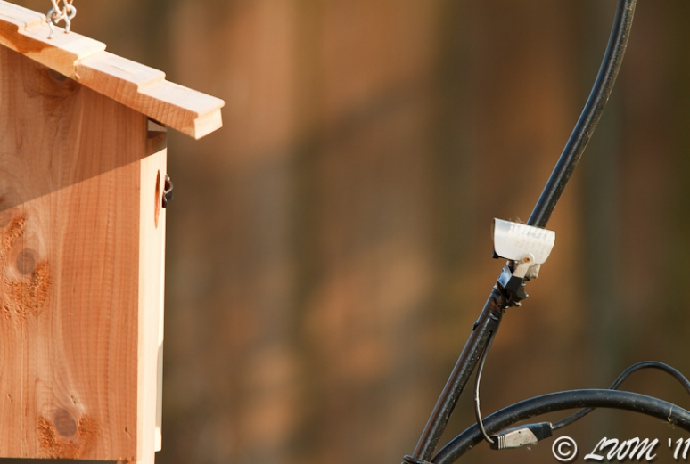Bird Cam Setup On Bird House With Nest