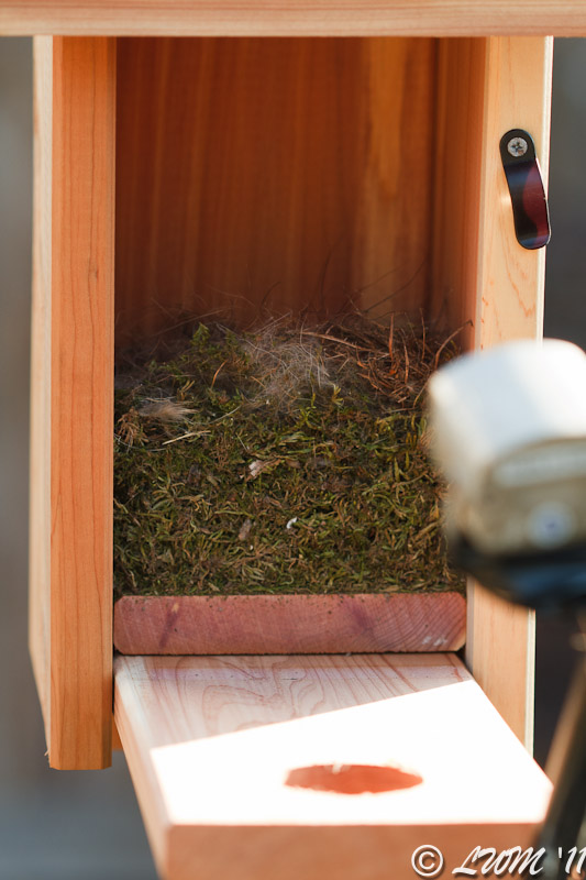 Inside Of Birdhouse With Carolina Chickadee Nest