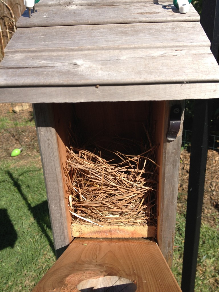 First Bluebird Nest Of 2012